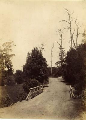 (On the Woonona - Bulli Road)