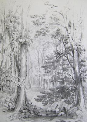Bush Scene, Illawarra