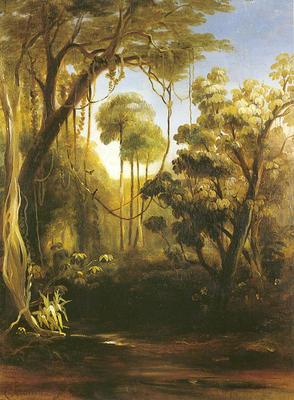 Forest Scene, Illawarra