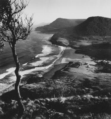 (Stanwell Park Beach, tree in foreground)